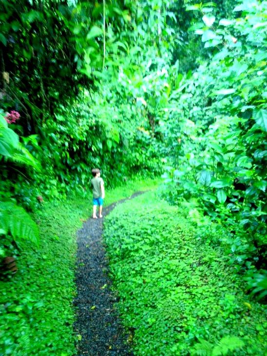 Lost Iguana Resort Walking Paths Costa Rica