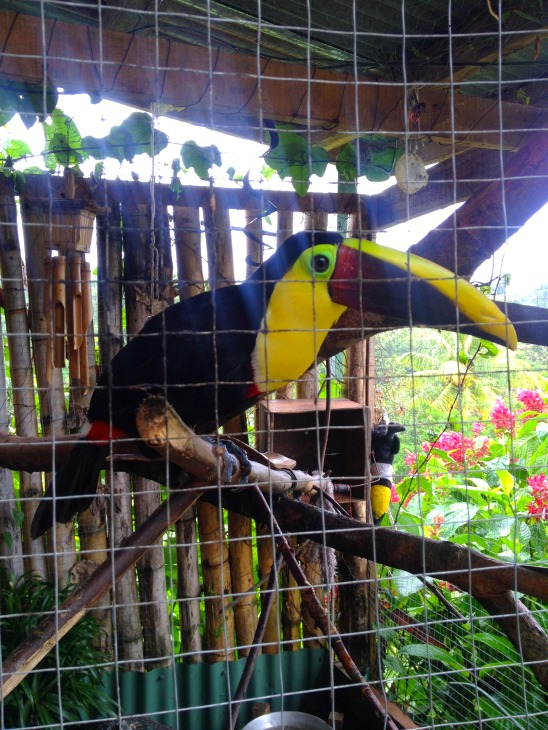Toad Hall Toucan Costa Rica