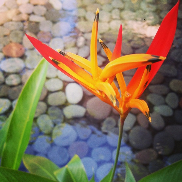 Tabacon Hot Springs Costa Rica Orange Flower Wanderlust Living