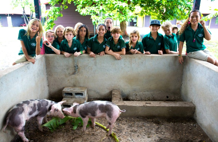 La Paz Anchor Project 5th Grade Class Pigs 2014