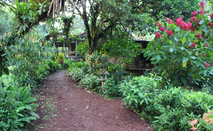 La Carolina Lodge Grounds and Cabins in Costa Rica from Wanderlust Living