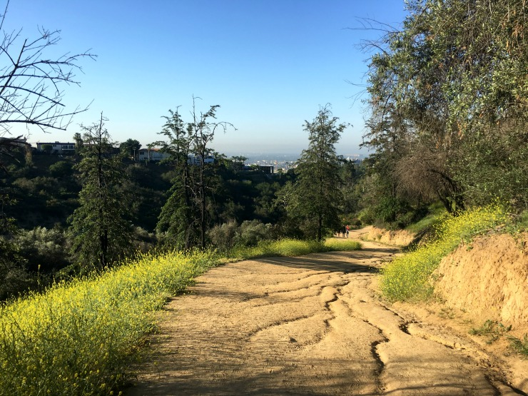 Hiking Path at Griffith Park Los Angeles