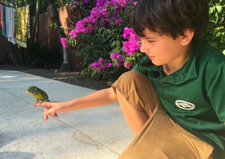 Parakeet in Costa Rica Hudson 1