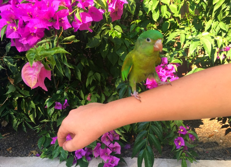 Parakeet in Costa Rica Wanderlust Living