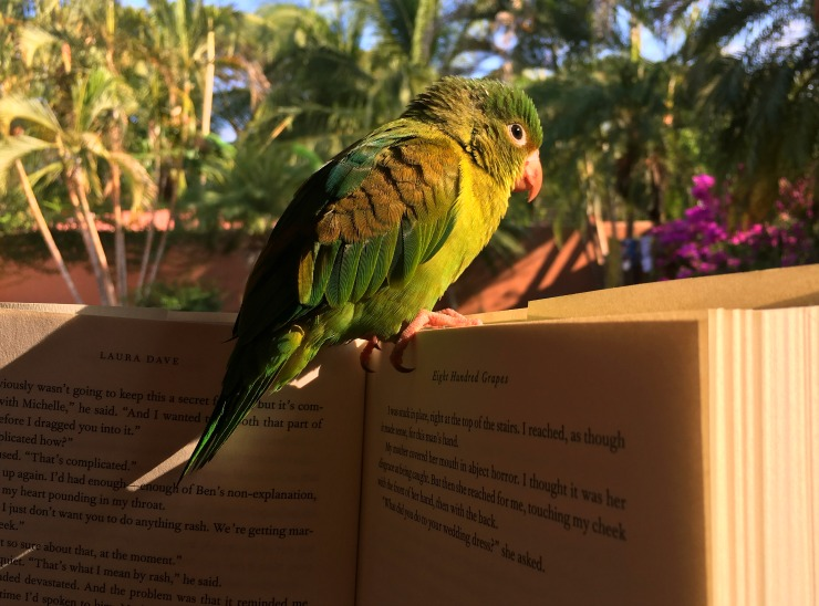 Parakeet on a book Costa Rica Wanderlust Living