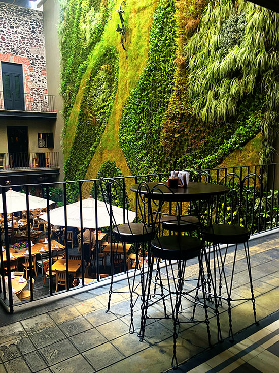 Downtown Hotel Green Living Wall Mexico City