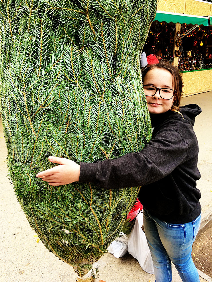 Getting a Christmas tree in Barcelona