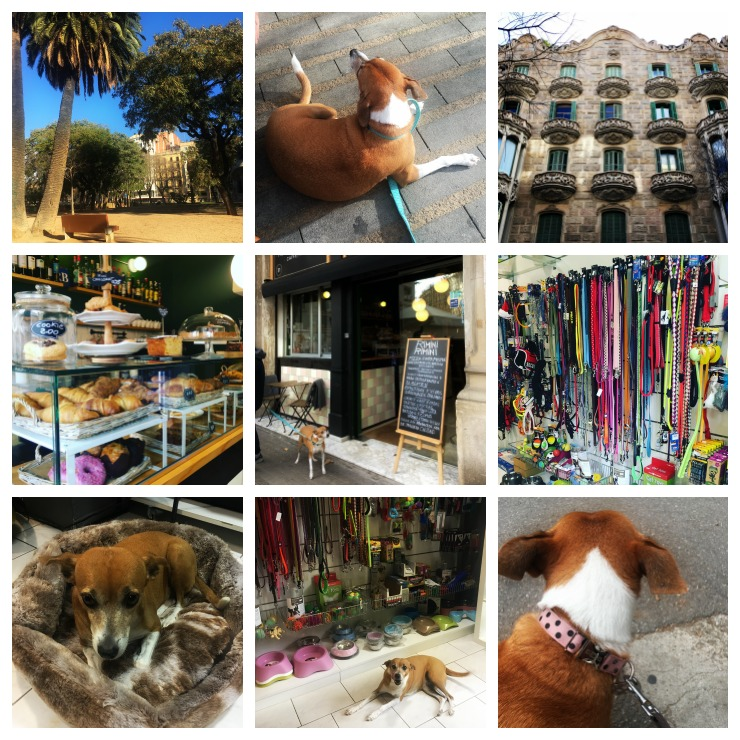 Life in Barcelona with a dog