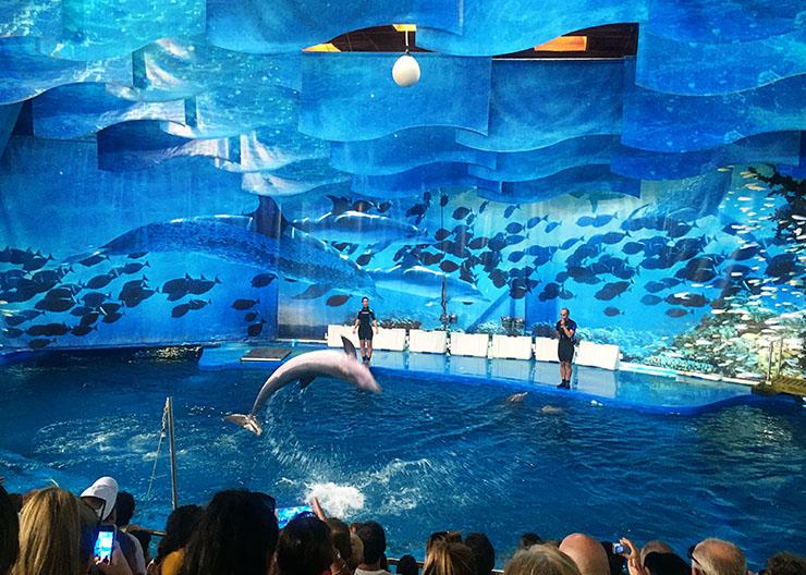 Barcelona Zoo Dolphin Show Barcelona With Kids Wanderlust Living